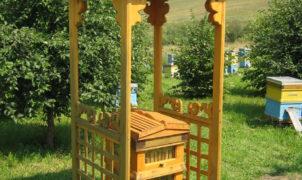пасека на алтае пчелы